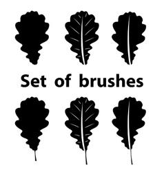 Brush set of oak leaf vector image