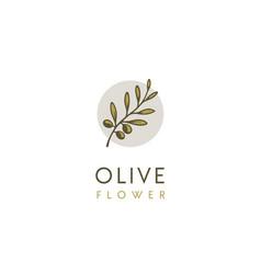 natural herbal olive oil plant leaf greek logo vector image