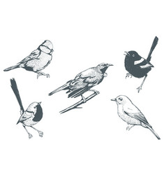 Set bird line art vector
