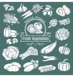 Set hand draw decorative isolated vegetables vector image