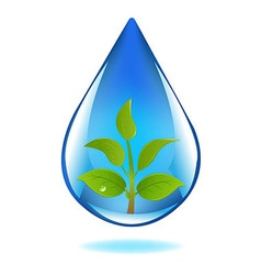 Drop Of Water With Sprout vector image