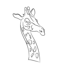 giraffe graphic lines vector image vector image