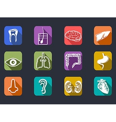 human internal organs long shadow icons set vector image