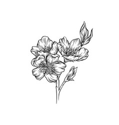 blooming flower branch black and white hand drawn vector image