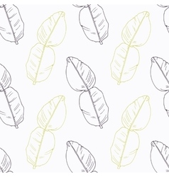 Hand drawn kaffir lime branch wirh flowers vector image