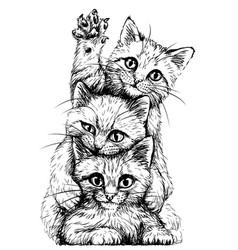 sketch cute kittens vector image