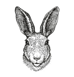 hand-drawn portrait of rabbit easter bunny vector image