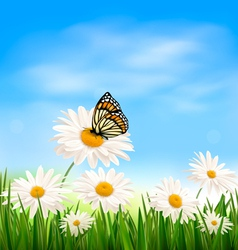 Nature background with green grass and butterfly vector image