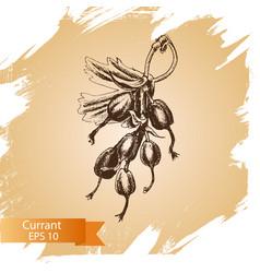 sketch currant - vector image