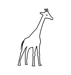 African animal icon giraffe design vector