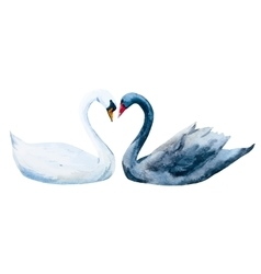Watercolor hand drawn swans vector image