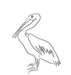 pelican graphic line vector image