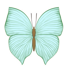 Beautiful vintage green butterfly isolated on vector