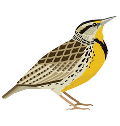 Birds western meadowlark isolated object vector