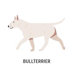 Bull terrier or bully cute white purebred dog of vector