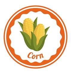 corn design vector image