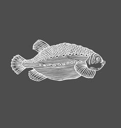 Ink sketch of fish vector