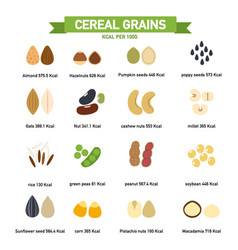 kilocalorie in cereal grains per100 gram vector image