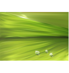 leaf surface with drops vector image