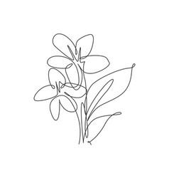 one single line drawing beauty jasmine flower vector image