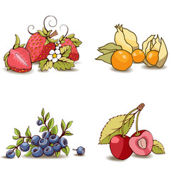 Painted set of berries vector