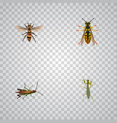 realistic bee grasshopper locust and other vector image