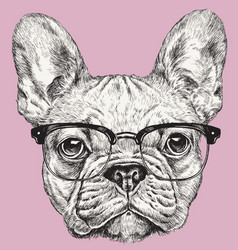 hipster geek french bulldog vector image vector image