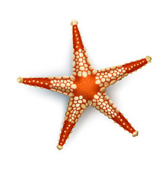badges stickers starfish in vector image