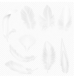 realistic soft white feathers set on transparent vector image
