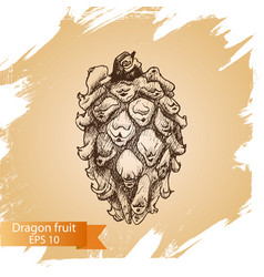 sketch - dragon fruit vector image