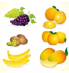 tropic fruits vector image