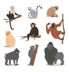 monkey set cute animal macaque monkeyish vector image