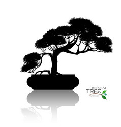 Bonsai tree black silhouette of bonsai vector
