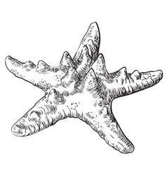 hand drawing seashell-25 vector image