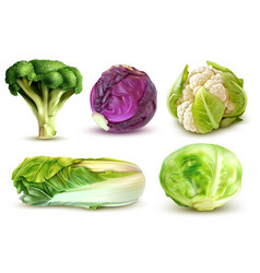 Cabbage realistic set vector
