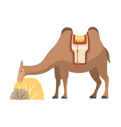 camel two humped desert animal with bridle and vector image
