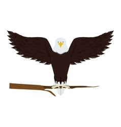 Eagle on a tree branch vector