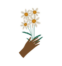 female hand holding bouquet camomile flowers vector image