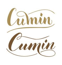 Hand written cumin text isolated on white vector