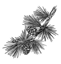 Larch hand-sketched conifer tree drawing w vector