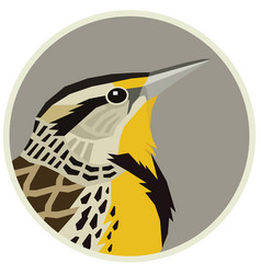 Western meadowlark a bird vector