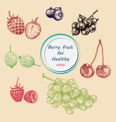 berry fruit set vector image
