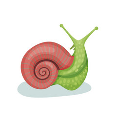 Snail gastropod mollusk on a vector