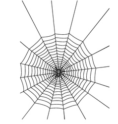 Spider with web vector image