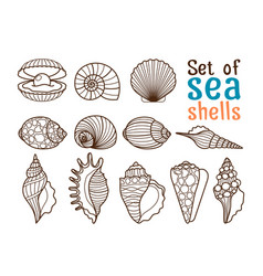 sea shell line icons vector image vector image