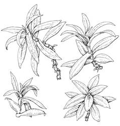 doodle tradescantia vector image