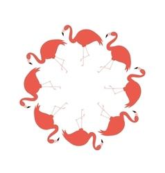 flamingos in circle vector image