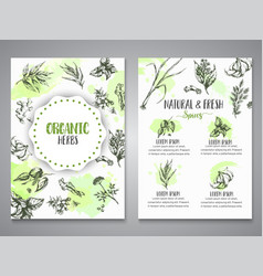 Herbs and spices posters herb plant spice hand vector