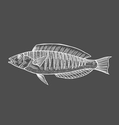 ink sketch of fish vector image