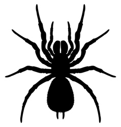 Silhouette of a spider vector image